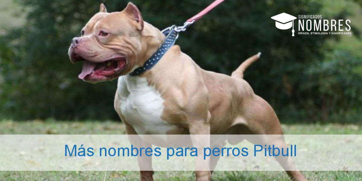 Más nombres para perros Pitbull
