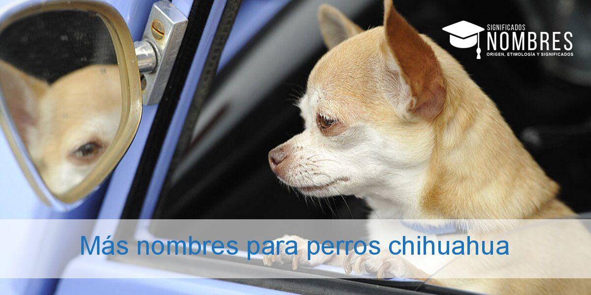 Más nombres para perros chihuahua