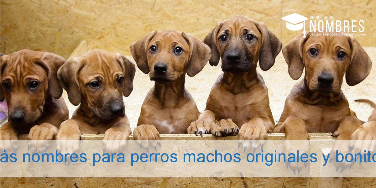 Más nombres para perros machos originales y bonitos
