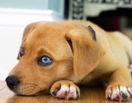 perrito pequeño macho