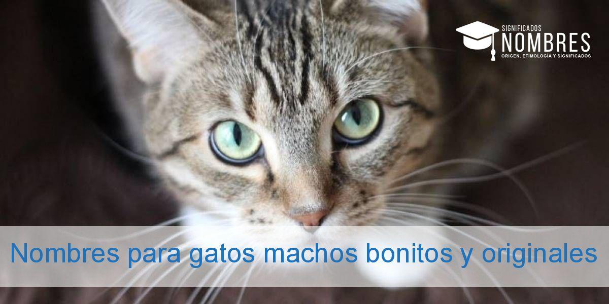 Nombres para gatos machos bonitos y originales