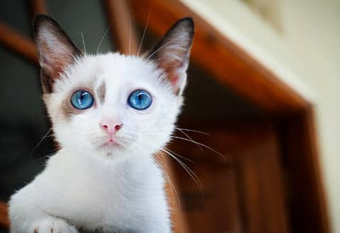 nombres bonitos gatos macho