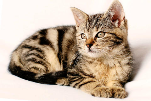 nombres originales de gatitas