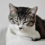 Nombres de gatas y gatitas elegantes y bonitos