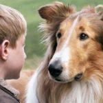 Nombres de perros famosos reales y de películas