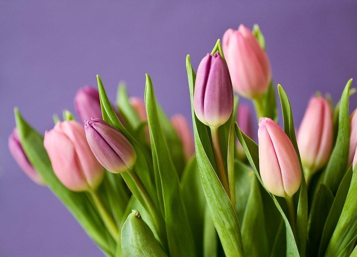 nombres de flores para personas