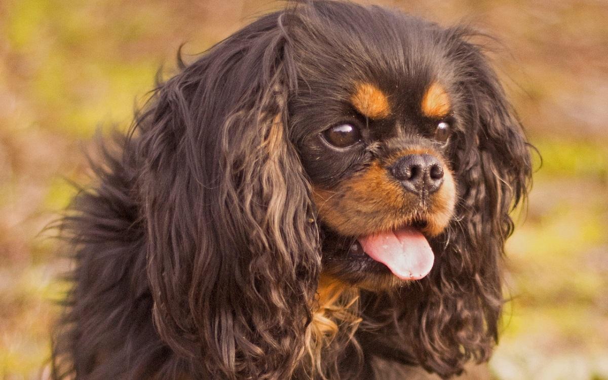 nombres de perras en italiano
